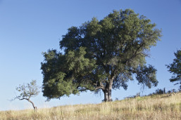 Beautiful 13 acres with rolling meadows and an old apple orchard for sale near Julian, CA.